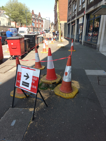 Trees, traffic cones, pavement, red tape